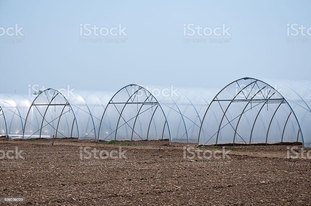 Grupo de nuevo invernaderos que sirven para que los vegetales foto de stock libre de derechos