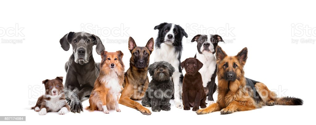 Group of nine dogs stock photo