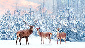 Group of noble deer in a snowy winter forest at sunset. Christmas fantasy image in blue, pink  and white color. Snowing.