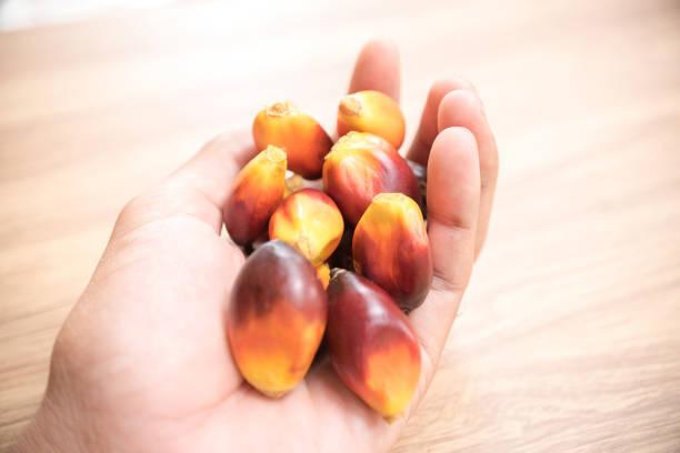 a group of oil palm fruits on wood table - palm oil bottles imagens e fotografias de stock