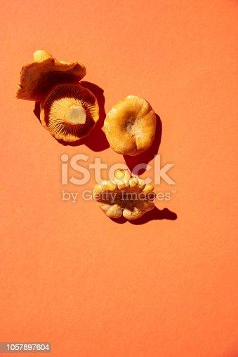 Group of orange mushrooms lying down on orange background