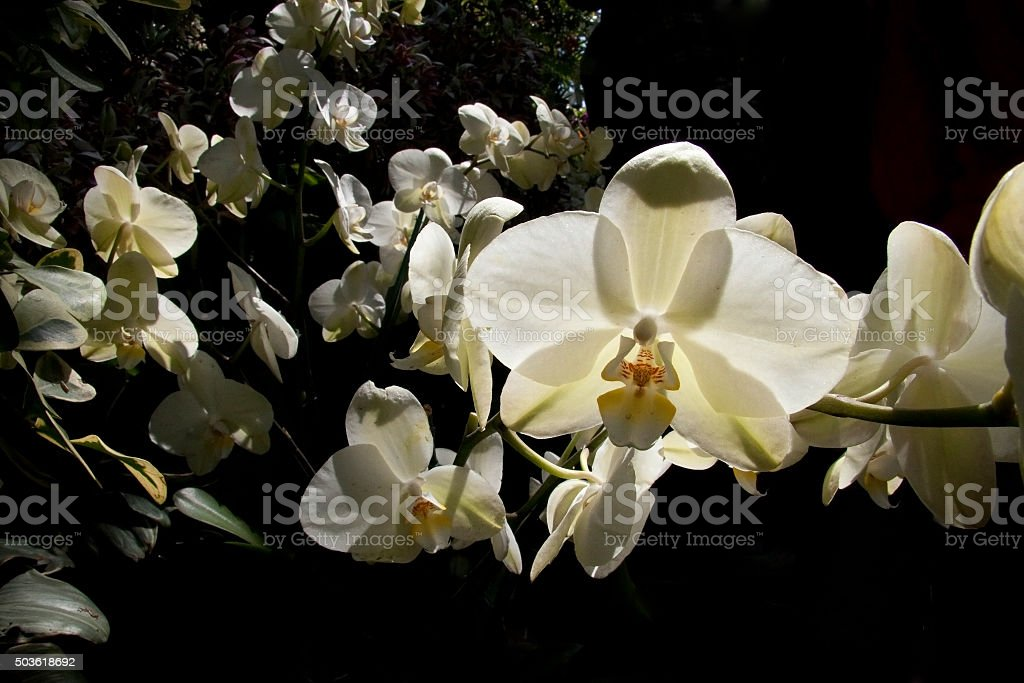 Group of Orchid stock photo