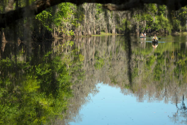 group of paddlers canoeing on shingle creek in kissimmee, florida. - kissimmee stock photos and pictures