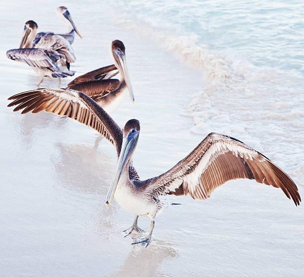 grupa pelicans - back to school zdjęcia i obrazy z banku zdjęć