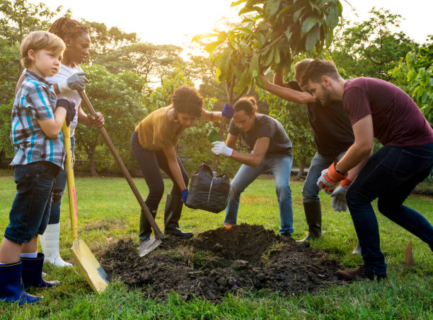 group of people plant a tree together outdoors - trees stock photos and pictures