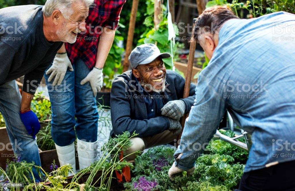 Group of people planting vegetable in greenhouse stock photo