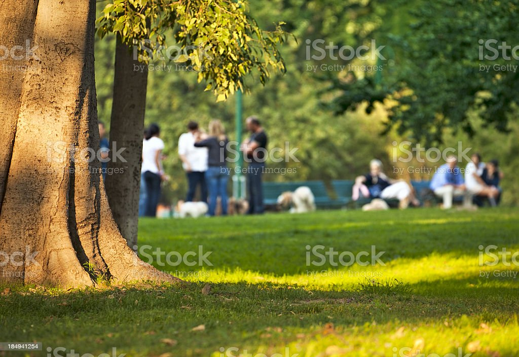Group of people relaxing among trees in city park. stock photo