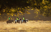 Group of people riding horses in a field on a beautiful autumn morning, UK.