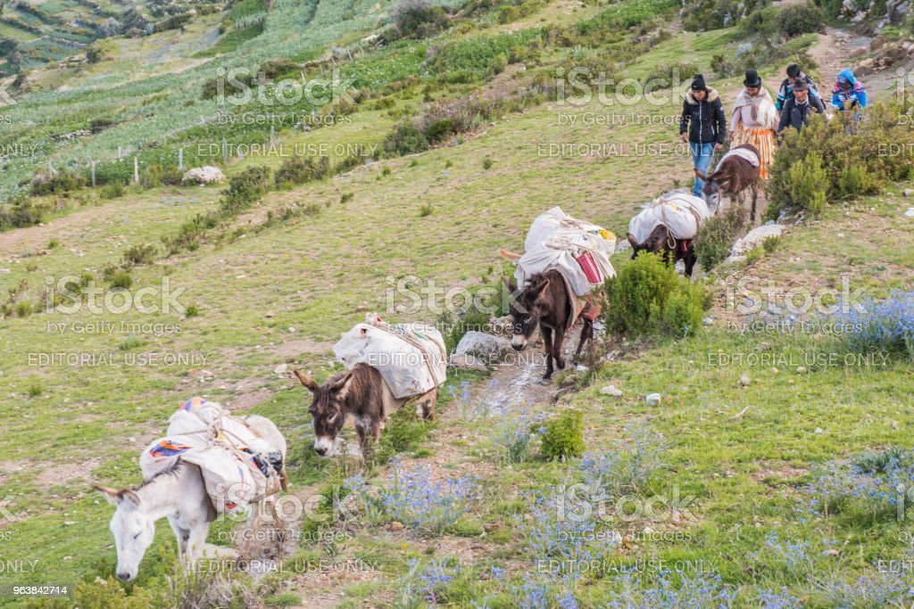 Group of people with mules at Isla del Sol (Island of the Sun), lake Titicaca, Bolivia. - Royalty-free Altiplano Stock Photo