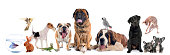 istock group of pet 665347372
