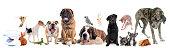 istock group of pet 810753374