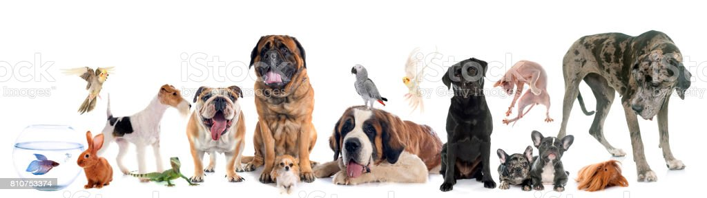 group of pet - foto stock