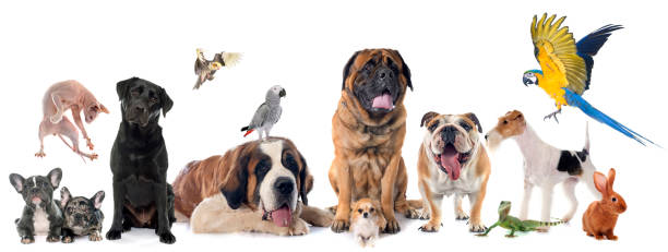 group of pet group of pet in front of white background domestic animals stock pictures, royalty-free photos & images