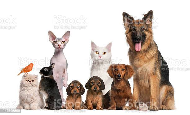 Group of pets dog cat bird rabbit picture id147698868?b=1&k=6&m=147698868&s=612x612&h=c22zamxkpo2k34doco hida8wuuh6bjr3xpbuqcmnig=