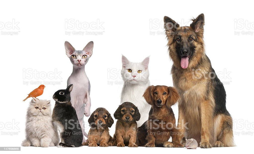 Group of pets: dog, cat, bird, rabbit stock photo