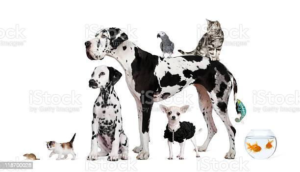 Group of pets dog cat bird reptile rabbit fish picture id118700028?b=1&k=6&m=118700028&s=612x612&h=abldws4gztncdnywmhpoyj6 c7nmxr6jmzj1v1dkog4=