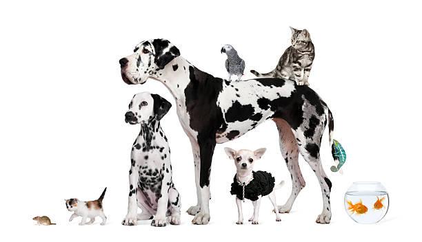 Groupe d'animaux de compagnie-chien, chat, oiseau, reptile, lapin, poissons - Photo
