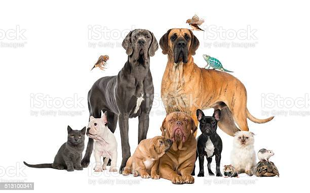 Group of pets dog cat bird reptile rabbit isolated picture id513100341?b=1&k=6&m=513100341&s=612x612&h=rwsb5cpkiq1wxllhop8cplx2gtvsg8shap1t23ggqn4=