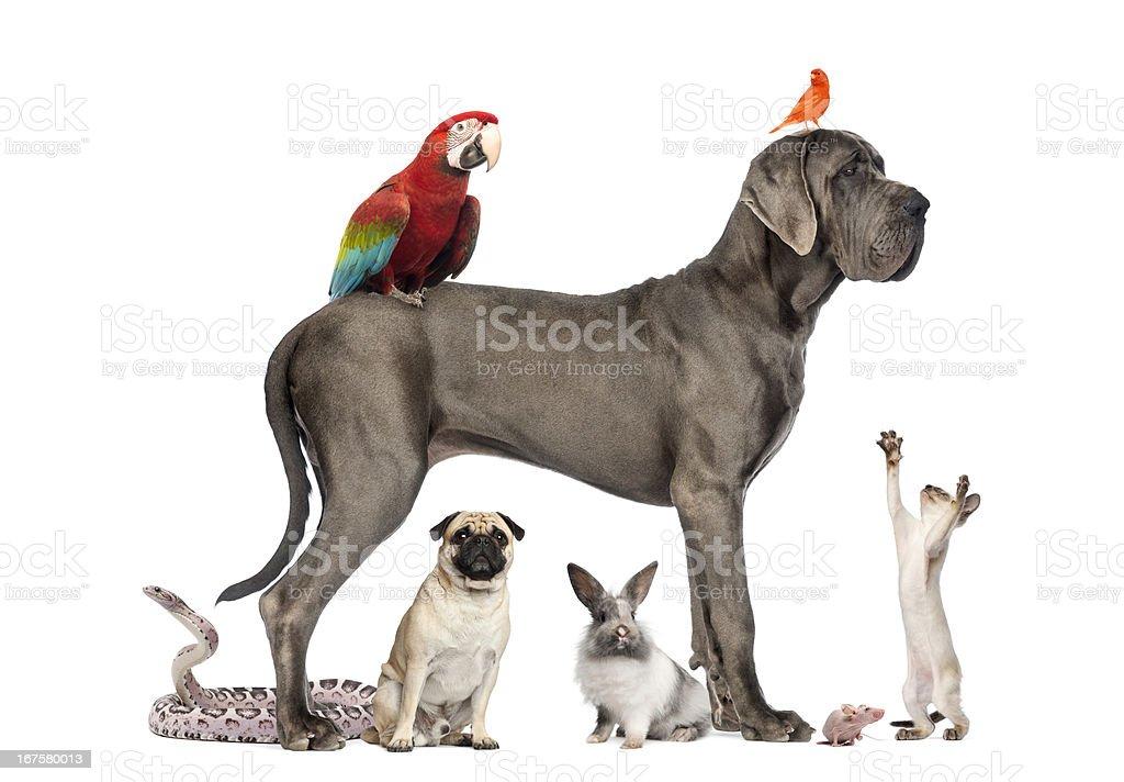 Group of pets - Dog, cat, bird, reptile, rabbit stock photo