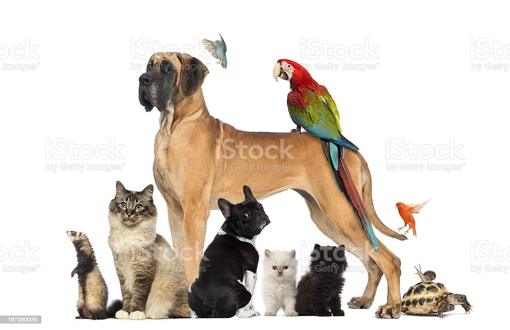 Group of pets - Dog, cat, bird, reptile, rabbit royalty-free stock photo