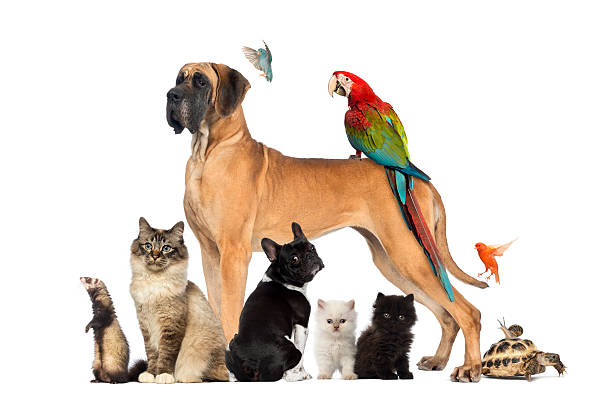 group of pets - dog, cat, bird, reptile, rabbit - 一群動物 個照片及圖片檔