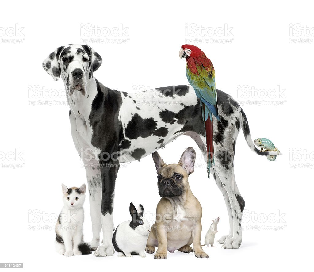 Group of pets - Dog, cat, bird, reptile, rabbit,rodent royalty-free stock photo