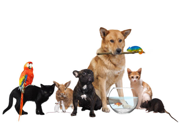 Group of Pets. Isolated on white background stock photo