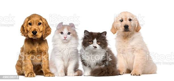 Group of pets kitten and puppy on a raw picture id496038013?b=1&k=6&m=496038013&s=612x612&h=qweuccbegvbklqw9kvgthl 3kicusgf419jagg9jb2c=
