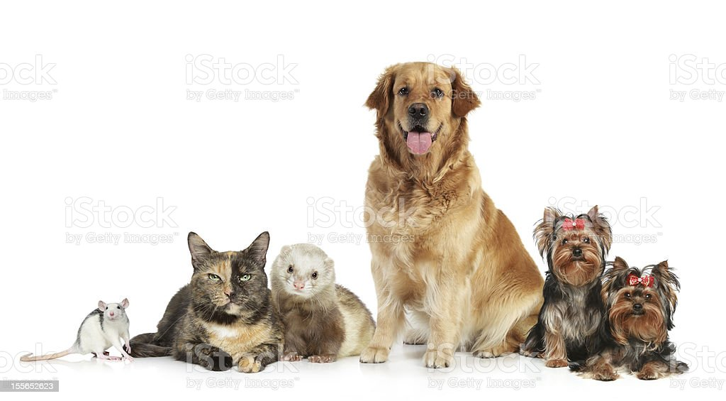 Group of pets on white background royalty-free stock photo