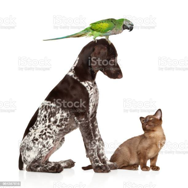 Group of pets on white background picture id964387616?b=1&k=6&m=964387616&s=612x612&h=9jq x7oxtekrmveb xl5vcm zj66fdrmglzlgjpvxji=