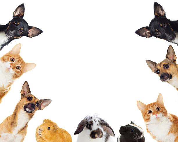 Gruppe von Haustiere Spähen – Foto
