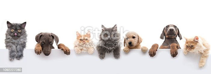 istock group of pets 1092227280