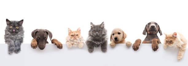 group of pets - питомцы стоковые фото и изображения