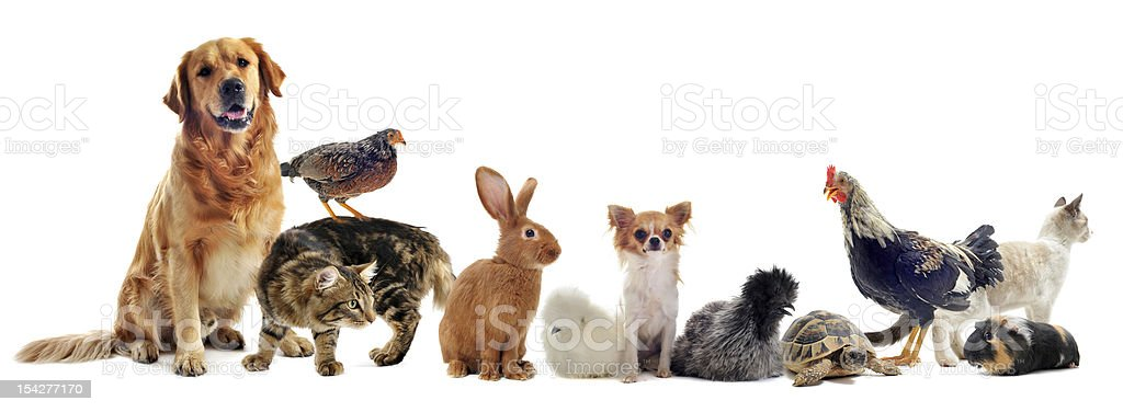 group of pets royalty-free stock photo