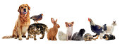 istock group of pets 154277170