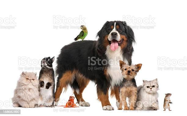 Group of pets picture id158682892?b=1&k=6&m=158682892&s=612x612&h=yd h5v9y c jxq6y3bxntoovlnktld86 oihy2pg l8=