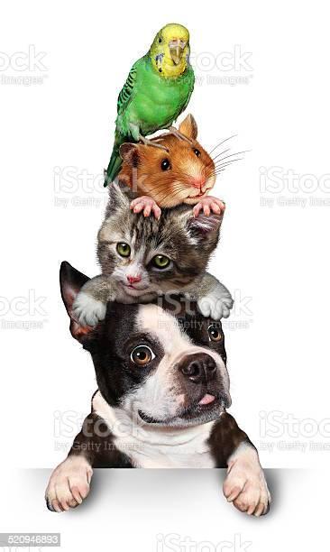 Group of pets picture id520946893?b=1&k=6&m=520946893&s=612x612&h=hxir1ckhnzs fjgm4ufxwocu1 yi6bwdxopzuwu1jpa=