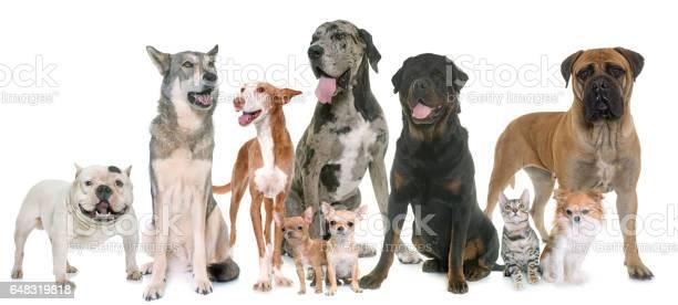 Group of pets picture id648319818?b=1&k=6&m=648319818&s=612x612&h=sv 1qqq2rvoyxdbmjcznriokxnchpblxmqacljfza00=