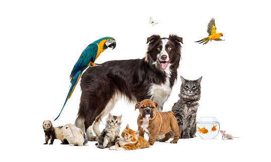 Group of pets posing around a border collie; dog, cat, ferret, rabbit, bird, fish, rodent