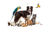 Group of pets posing around a border collie; dog, cat, ferret, rabbit, bird, fish, rodent