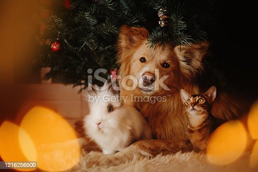 group of pets posing under a christmas tree indoors