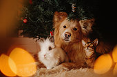 group of pets posing together under a christmas tree indoors