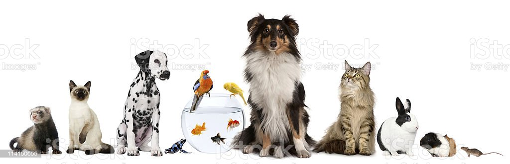 Group of pets sitting, white background. stock photo
