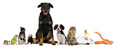 istock Group of pets sitting, white background. 114318922