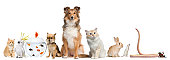istock Group of pets sitting, white background. 114434398