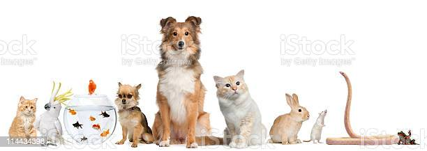 Group of pets sitting white background picture id114434398?b=1&k=6&m=114434398&s=612x612&h=di8vycn0tlvjrodtnbrkkmspevckwjsmjtw8pde0szo=