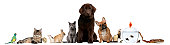 istock Group of pets sitting, white background. 115640271