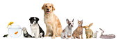 istock Group of pets sitting, white background. 121045484