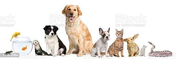 Group of pets sitting white background picture id121045484?b=1&k=6&m=121045484&s=612x612&h=t0kml2wjags6vqx v0pebx96goppnesgqh j5itopyo=