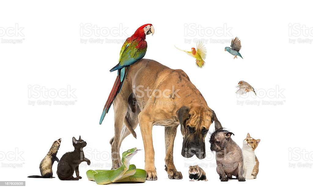 Group of pets together isolated on white stock photo